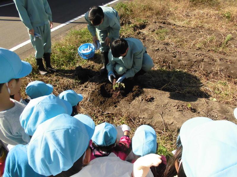 サツマイモの掘り方を指導する生徒